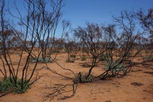 Bushfire Recovery